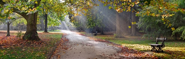 Path in the autumn park. Autumn Landscape. Park in Autumn. Panorama.